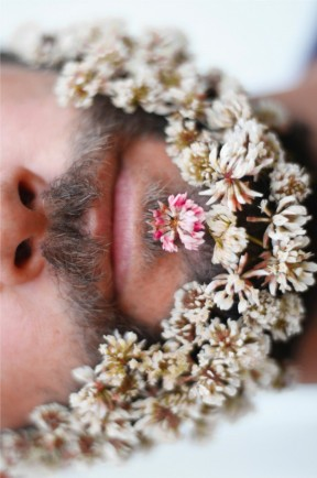 clover-flowers-beard_thumb