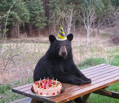 bear-birthday-cake